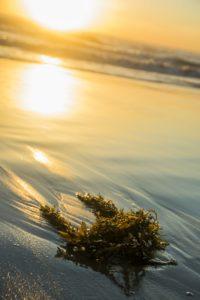 washed-up-seaweed